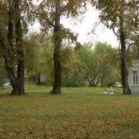俄罗斯哈巴罗夫斯克--Tree--树, Хабаровск