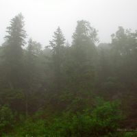 Туман на Чёрной скале / Haze at Chyornaya Skala (Black Rock), Бреды