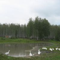 Кунашак, пруд, Кунашак