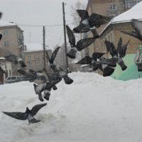 голуби при взлёте..., Куса
