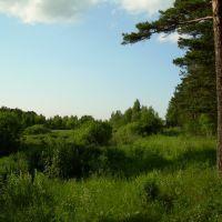 Forest near Miass, Миасс