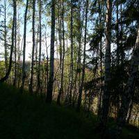 Лес (04авг2012), Сим