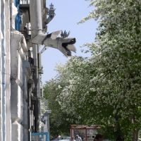 Dragon, Троицк