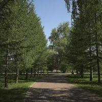 Аллея на Алом поле, Челябинск