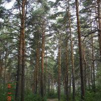 Тропа, Южно-Уральск