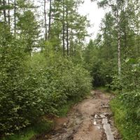 Дорога Ключевский-Соболино 19, Давенда