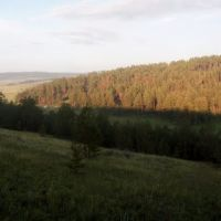 Forest in the morning, Жиндо