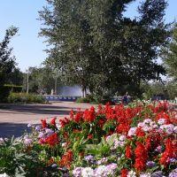 Цветы, Краснокаменск