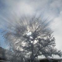 Дерево, Краснокаменск