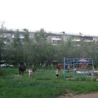 Кони, Краснокаменск