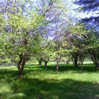 Васильевский сад, Киря