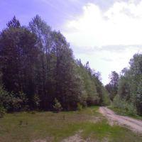 В лесу о вечном шепчутся осины...., Киря