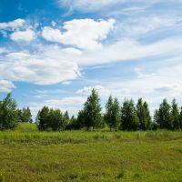 Birches near the road, Комсомольское