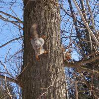 Squirrels (Белки), Кугеси