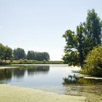 Pond, Кугеси
