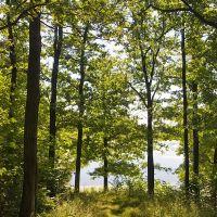 Sunny forest, Кугеси