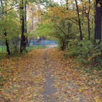 Вход в РОЩУ, золотая осень, Новочебоксарск