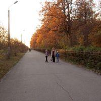Аллея вдоль рощи, Новочебоксарск