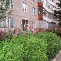 заросли у подъезда, Новочебоксарск