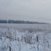 Вид на Рощу с поля, Новочебоксарск