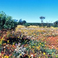 le désert en fleurs, Гералдтон