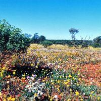 le désert en fleurs, Мандурах