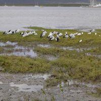 Cairns, Esplanade, birds, Каирнс