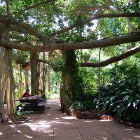 Rockhampton Botanic Gardens, Рокхамптон