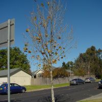 Armi_S1_Tree2, Армидейл