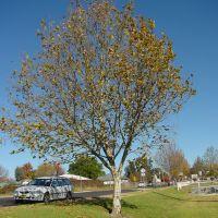 Armi_S1_Tree5, Армидейл