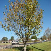 Armi_S1_Tree6, Армидейл