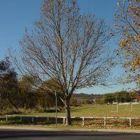 Armi_S1_Tree10, Армидейл