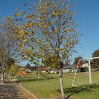 Armi_S1_Tree17, Армидейл