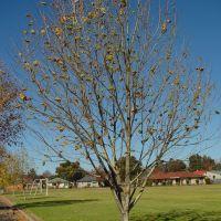 Armi_S1_Tree20, Армидейл