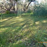 Nyngan - Swampy area near the Weir - 2014-01-15, Батурст