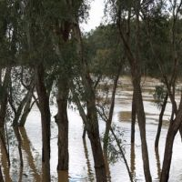 Murrumbidgee, October 2010, Вагга-Вагга