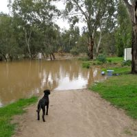 """Where did my path go?"" Wagga Wagga Floods, Вагга-Вагга"