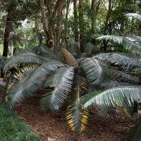 Botanic Garden 8, Воллонгонг