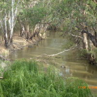 Warren - Gunningbar Creek looking upstream - 2014-01-23, Дуббо-Дуббо