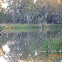 Nyngan - Bogan River about 1.8 km Upstream from the Weir - 2014-01-16, Оранж