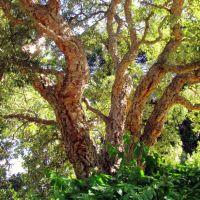 Geelong Botanic Garden, Гилонг