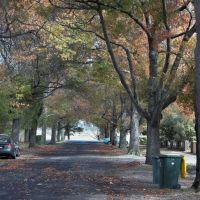 Autumn colours in Gnarr Street, Ballarat, Балларат