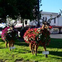 Rudolf the Petunia Deer, Балларат