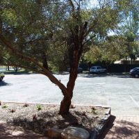 Kingdom Hall Jehovah´s Witn., Alice Springs, Australia, Parking, Алис Спрингс