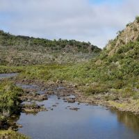 A Creek, Лаункестон