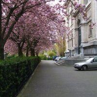 Весна в Антверпене, Антверпен