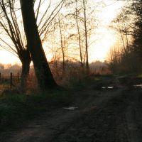 Veldwegel nabij Asserij, Алост