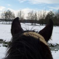 field in winter, Алост