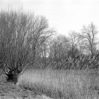 Reeds at the Damvalleimeer, Алост