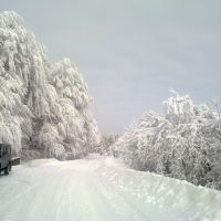Габрово - Узана - на 21.01.2010 г., Михайловград